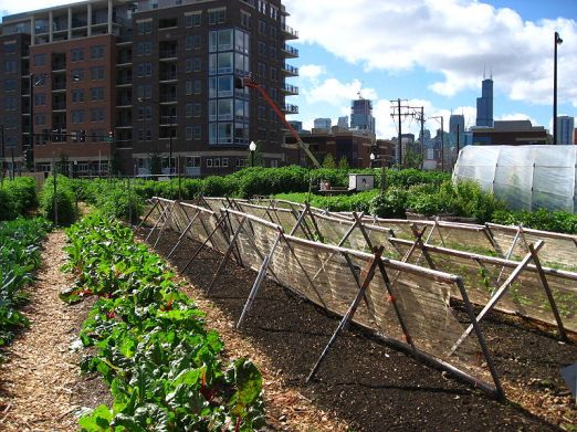 800px-New_crops-Chicago_urban_farm