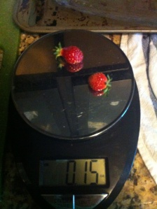 First harvest of the season: 0.15 ounces of strawberries.  Very sweet!